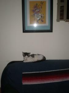 cleo on sofa